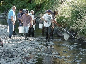 Umatilla Tribal Members saving straanded salmon.  (Photo courtesy of Confederated Tribes of the Umatilla Nation (2000))Umatilla